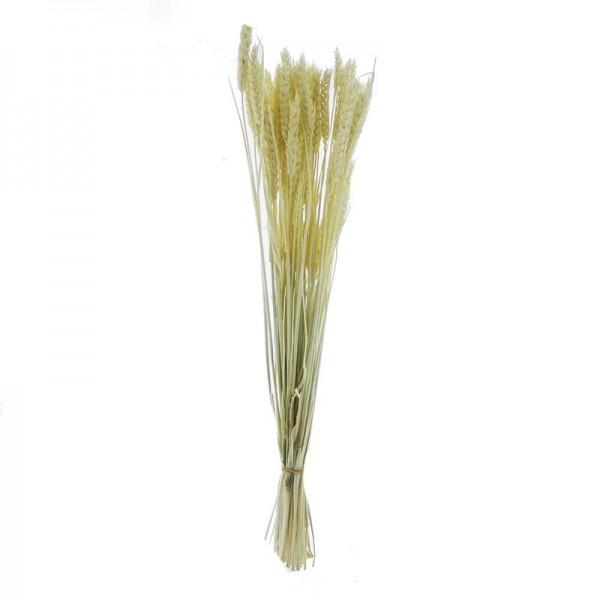 1 Bağ Beyazlatılmış Doğal Kuru Buğday Tarwe