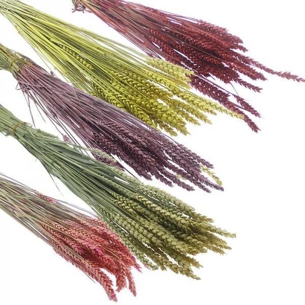 1 Bağ Kurutulmuş Doğal Renkli Buğday Başağı Tarwe