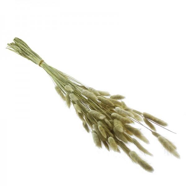 1 Bağ Tüylü Doğal Çiçek Lagurus