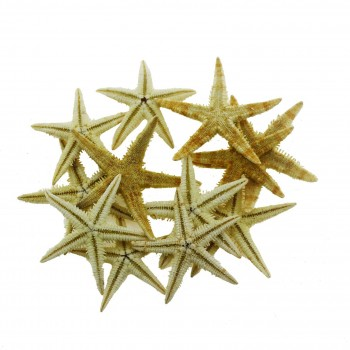 12 Adet 3-4,5cm Doğal Deniz Yıldızı