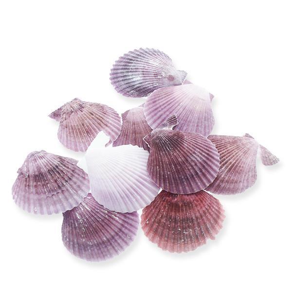 20 Adet 6-7cm Pecten Novalis Deniz Kabuğu