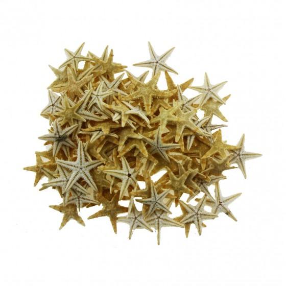 50 Adet 1-1,5cm Doğal Deniz Yıldızı