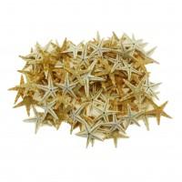 50 Adet 2-3cm Doğal Deniz Yıldızı