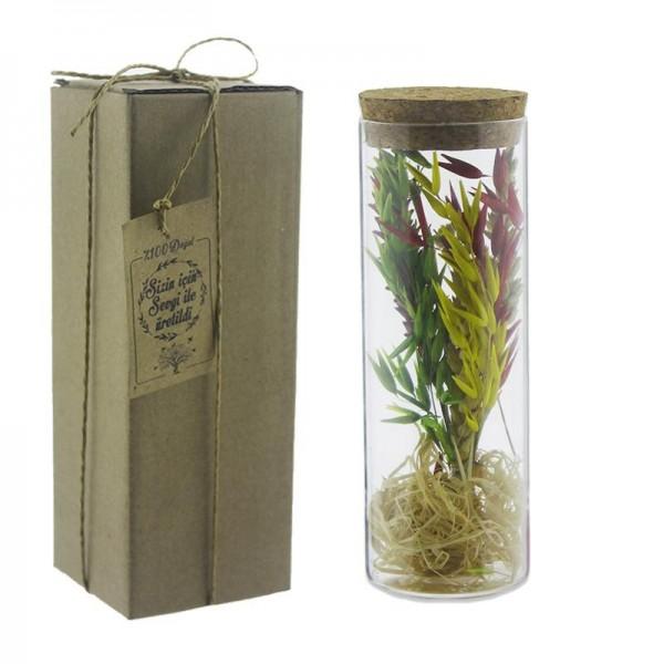 Cam Tüp İçinde Doğal Uzun Ömürlü Kuru Çiçek Yulaflı