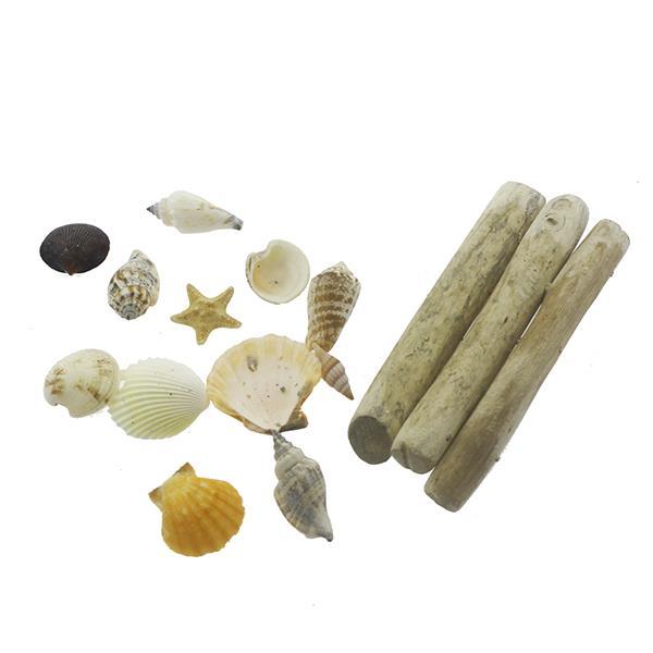 Karışık Deniz Kabukları Dekor Seti