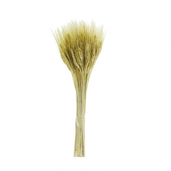 Kuru Başak Çiçek Demedi 35-40cm